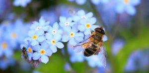 """""""Summ summ summ…"""" – die Bienen in der Uni-Kita"""
