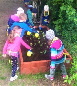 Read more about the article Gemüsebeete für unsere Kids in Dersekow